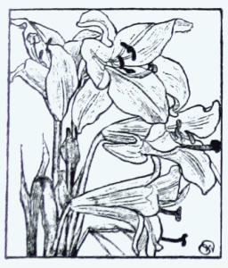 kwiat_zycia